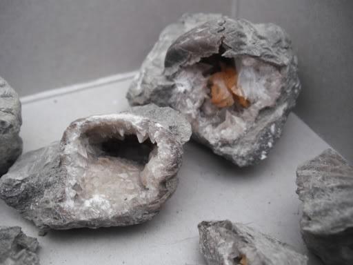 Geodized brachiopods